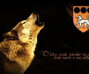 Wallpaper Wolf Beaters Lobo wallpaper